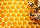 蜂巢 临床应用 治疗急性乳腺炎