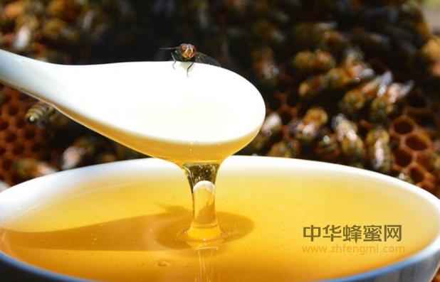 复方蜂胶酊 制品 保健