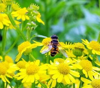 【宝宝 蜂蜜】_如果你卖蜂蜜有人嫌贵的,你就这么说……