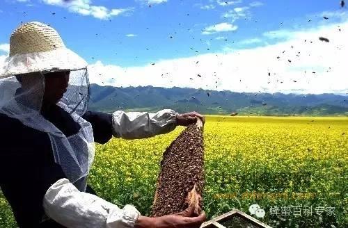 【蜂蜜品牌】_养蜂人越来越少成本越来越高,为何蜂蜜一直没有涨价
