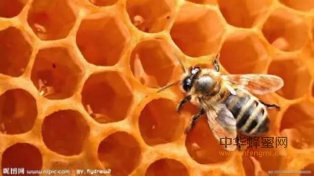 【吃蜂蜜】_原蜜是什么样的?
