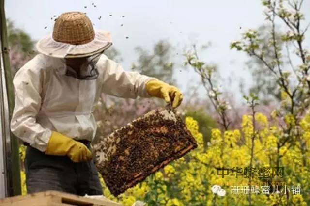 【鸡蛋 蜂蜜】_每天吃点蜂蜜对健康有益