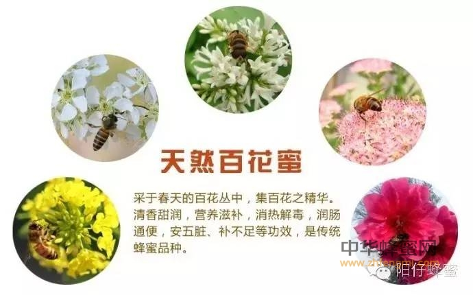 【蜂蜜醋减肥法】_注意!这八种蜂蜜根本不存在,看到了别买!