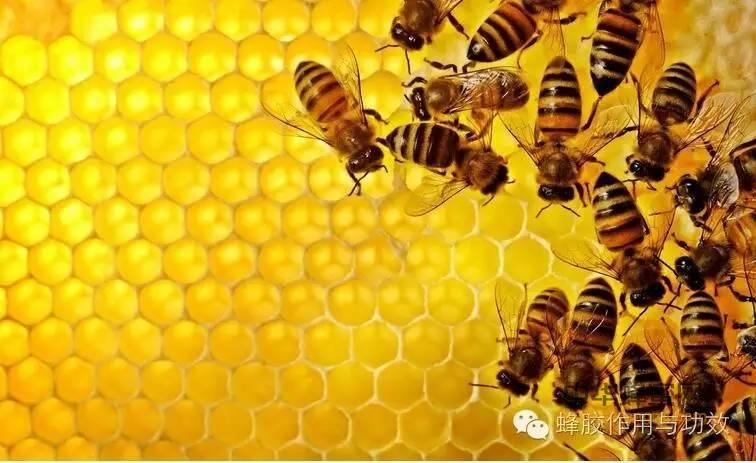 【香蕉蜂蜜面膜】_蜂胶食用细节上的技巧与忌讳,你都知道哪些?