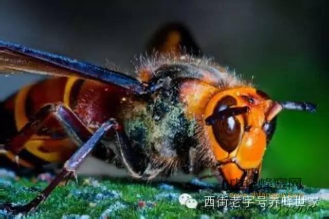蜂蜜的美容功效