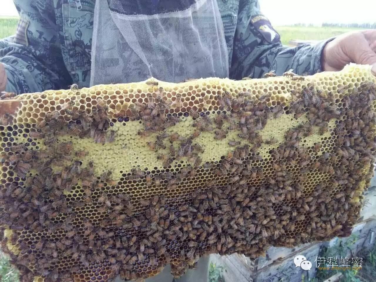 【蜂蜜有什么好处】_絮香·伊犁蜂蜜—26年的良心养蜂人