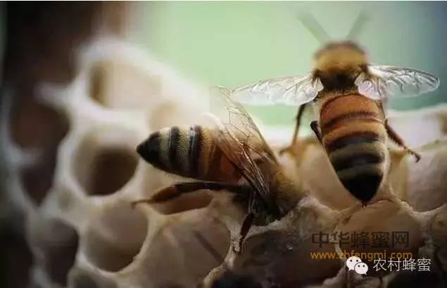 【蜂蜜真假鉴定方法】_蜜蜂疾病观察诊断技术 养蜂人必看