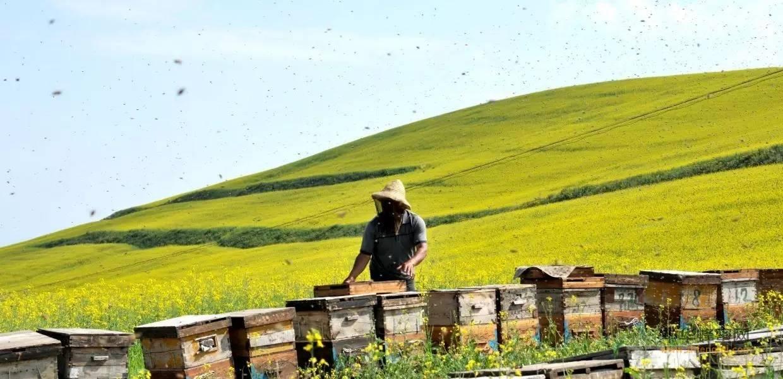 【为什么蜂蜜】_蜂农不想养蜂了,只有4个理由!