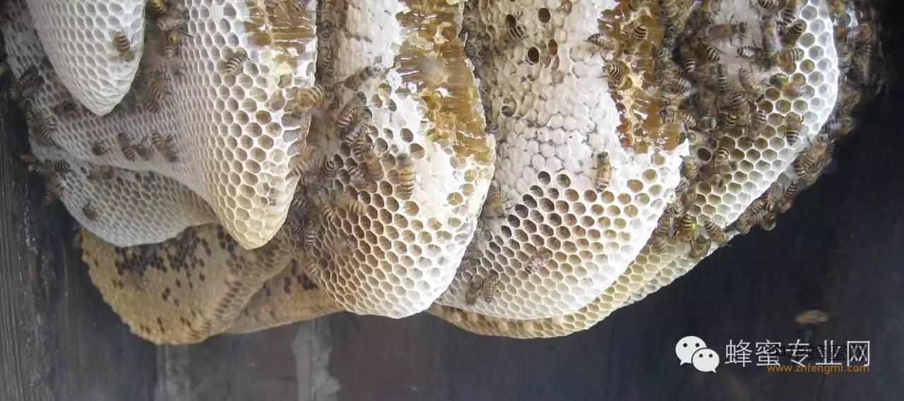 【珍珠粉蜂蜜面膜】_蜂蜜还能食疗,你知道吗?