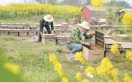 【面膜蜂蜜】_还蜂农一个清白!!夏天蜂蜜结晶的真相,看完惊呆了!