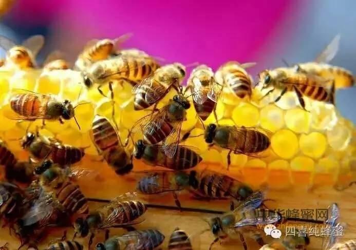 【蜂蜜咳嗽】_21种蜂蜜疗法轻松搞定各种咳嗽!