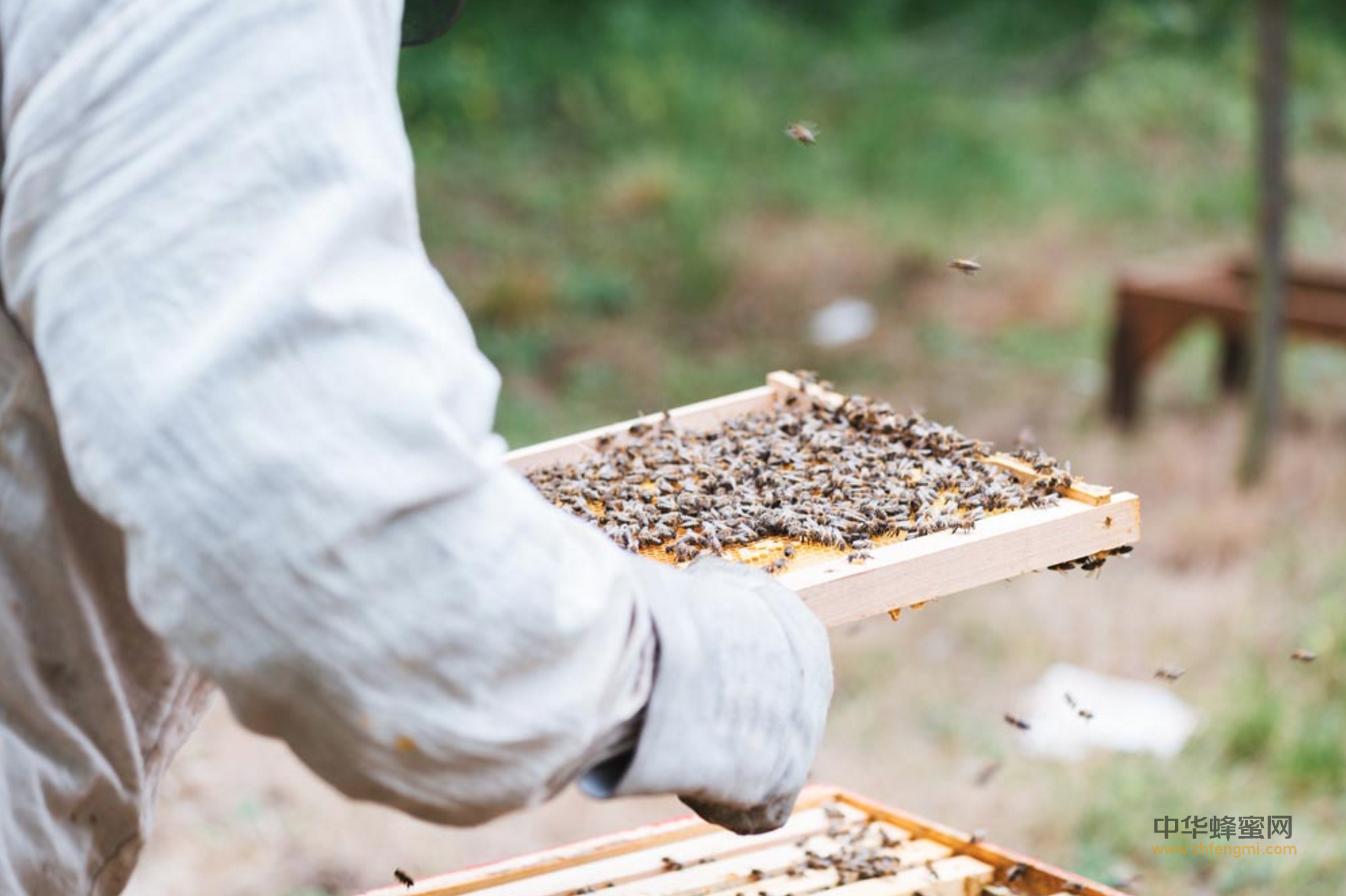 迁西县 丰顺 养蜂 养蜂合作社 养蜂技术