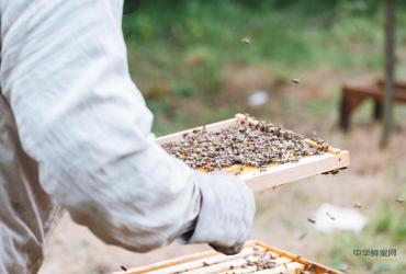 大山里的甜蜜事业 ——迁西县丰顺养蜂合作社