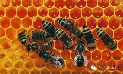【可以喝蜂蜜水吗】_蜂王浆的功效与作用及食用方法。
