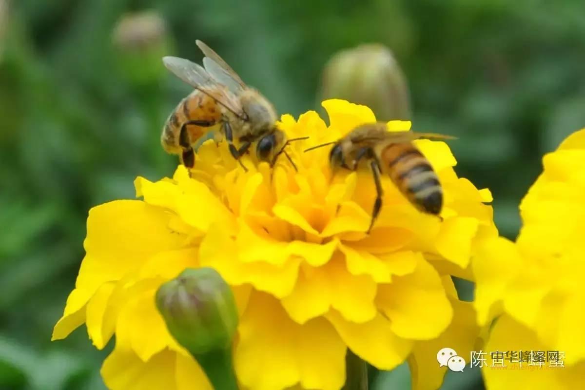 【洋槐蜂蜜的功效】_多喝蜂蜜益处多多
