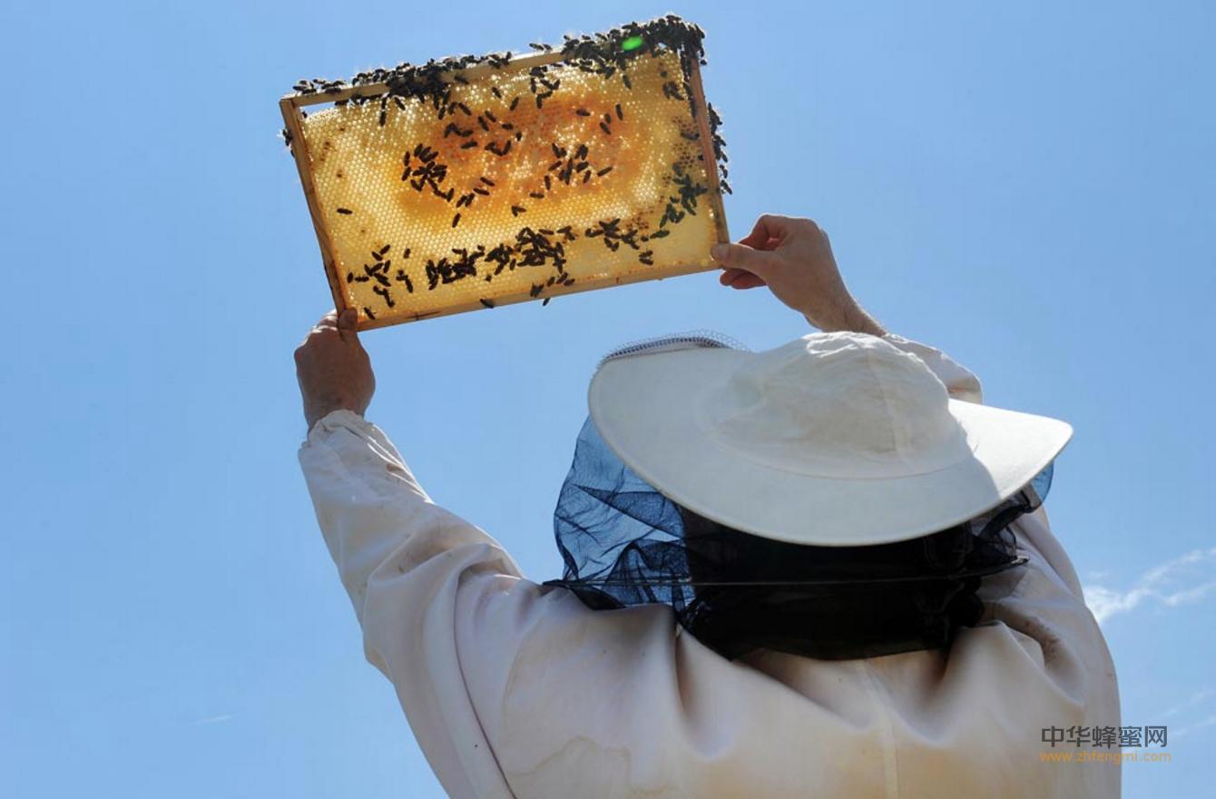 中国养蜂学会 青州2016新型蜂农培训班 养蜂技术 养蜂培训 养蜂合作社