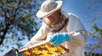 海南省成立蜂产品协会助力农民脱贫