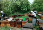 琼海市 林下养蜂 蜜蜂养殖 海南省蜂业学会