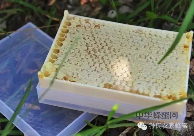 【蜂蜜的功效作用】_巢蜜,你吃了吗?
