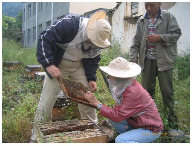 李春林 蜂王 养蜂人 中华蜜蜂 中蜂养殖合作社