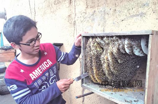 养蜂人 蜜蜂养殖 养蜂技术 养蜂致富 养蜂经验 养蜂新闻