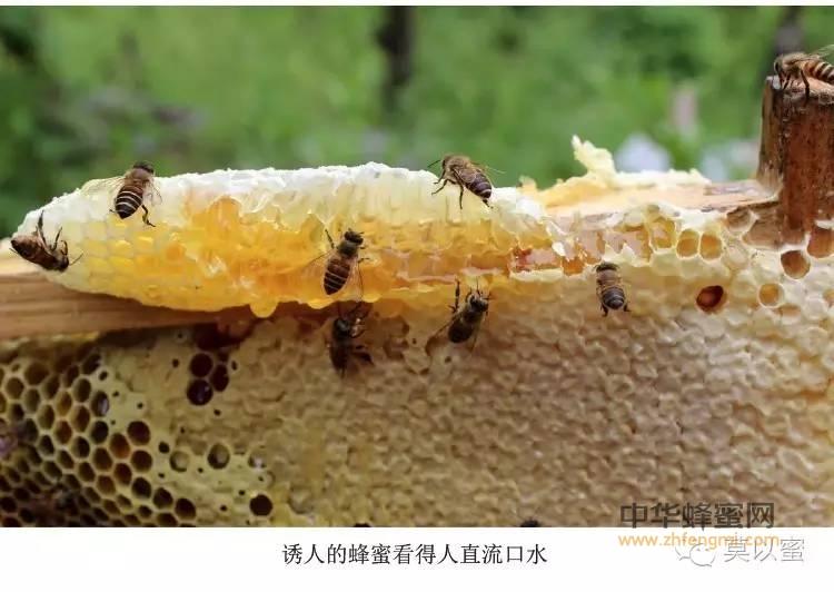 【蜂蜜做法】_蜂蜜保健偏方知多少