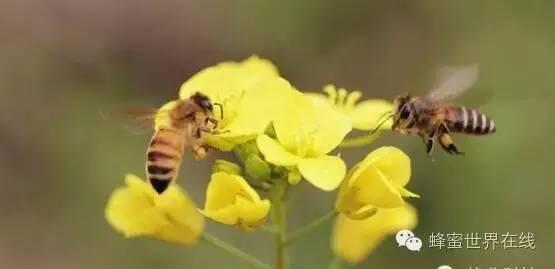 【蜂蜜的功效与作用及食用方法】_让蜂蜜营养翻倍的N种吃法!