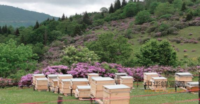 土耳其 蜂蜜 国外蜂蜜 蜂蜜行情 蜂蜜市场 蜂蜜新闻