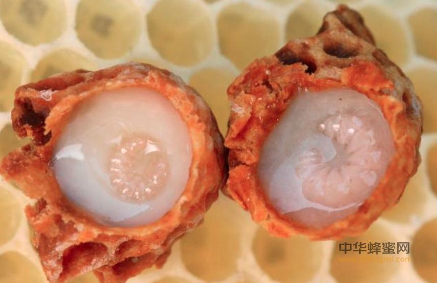 蜂王浆 药用 价值 蜂王浆功效 蜂王浆的作用 蜂王浆的好处