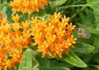 蜂蜜 央视 蜜蜂 蜂蜜妙用 蜂蜜吃法 蜂蜜作用