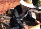 养蜂人 白糖 蜜蜂 蜂蜜惨糖 养蜂技术 奖励饲喂