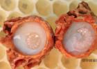 蜂王浆 亚健康 增强睡眠 蜂王浆的作用