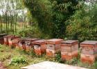 武宁县 蜜蜂养殖 养蜂历史 中华蜜蜂之乡 蜂蜜 蜜蜂