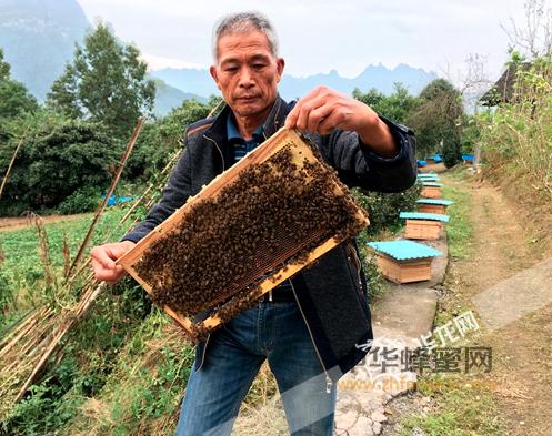 养蜂人 养蜂技术 中蜂养殖 养蜂致富 养蜂