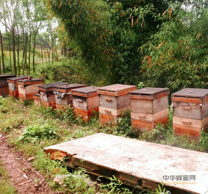 大理 蜜蜂养殖 养蜂技术 养蜂培训 扶持 补贴