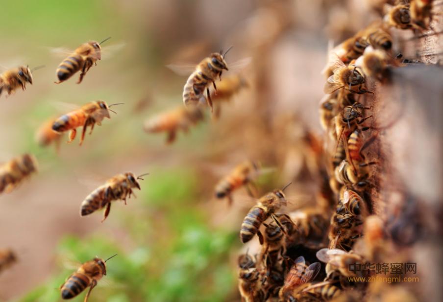 养蜂业 积石山县 蜜蜂养殖 合作社 养蜂 蜜蜂