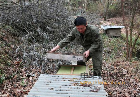 土蜂 养蜂人 中华蜜蜂 蜂蜜 蜜蜂 蜜蜂养殖 养殖技术