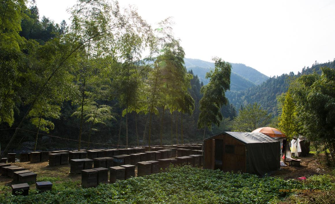 黑龙江 养蜂人 于鹏 蜂蜜 蜜蜂养殖 蜜蜂养殖技术 养蜂技术