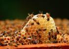 山东省 养蜂机具 购置补贴 蜂业协会 养蜂业 养蜂