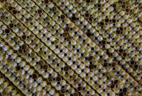 日前 第二届《蜂王浆》应用研究高峰论坛暨全国蜂王浆工作会议在南京举行