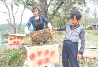 蜜蜂 蜜蜂养殖 养蜂合作社 养蜂场地 养蜂技术