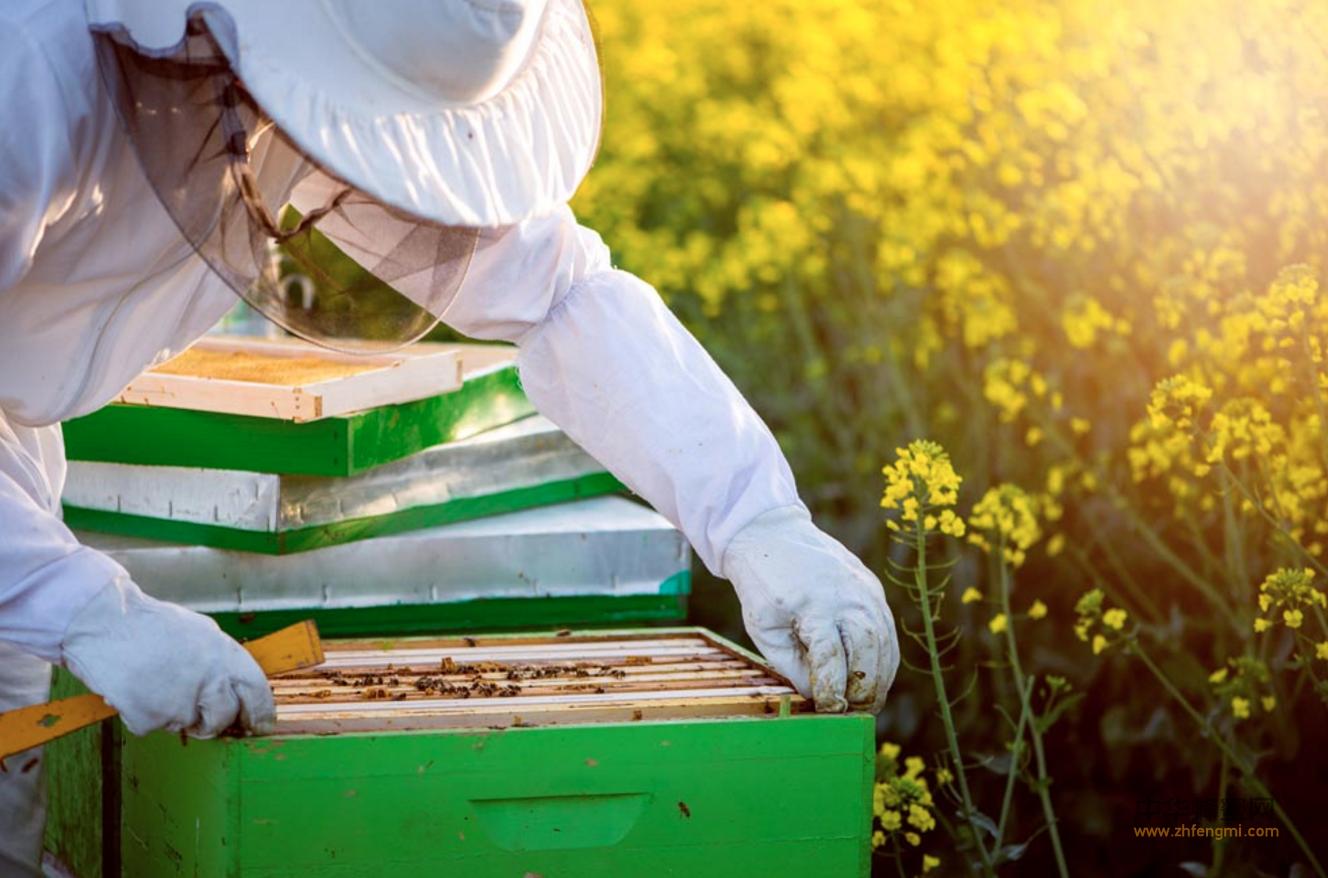 蜜蜂 中蜂养殖 蜜源 土蜂蜜