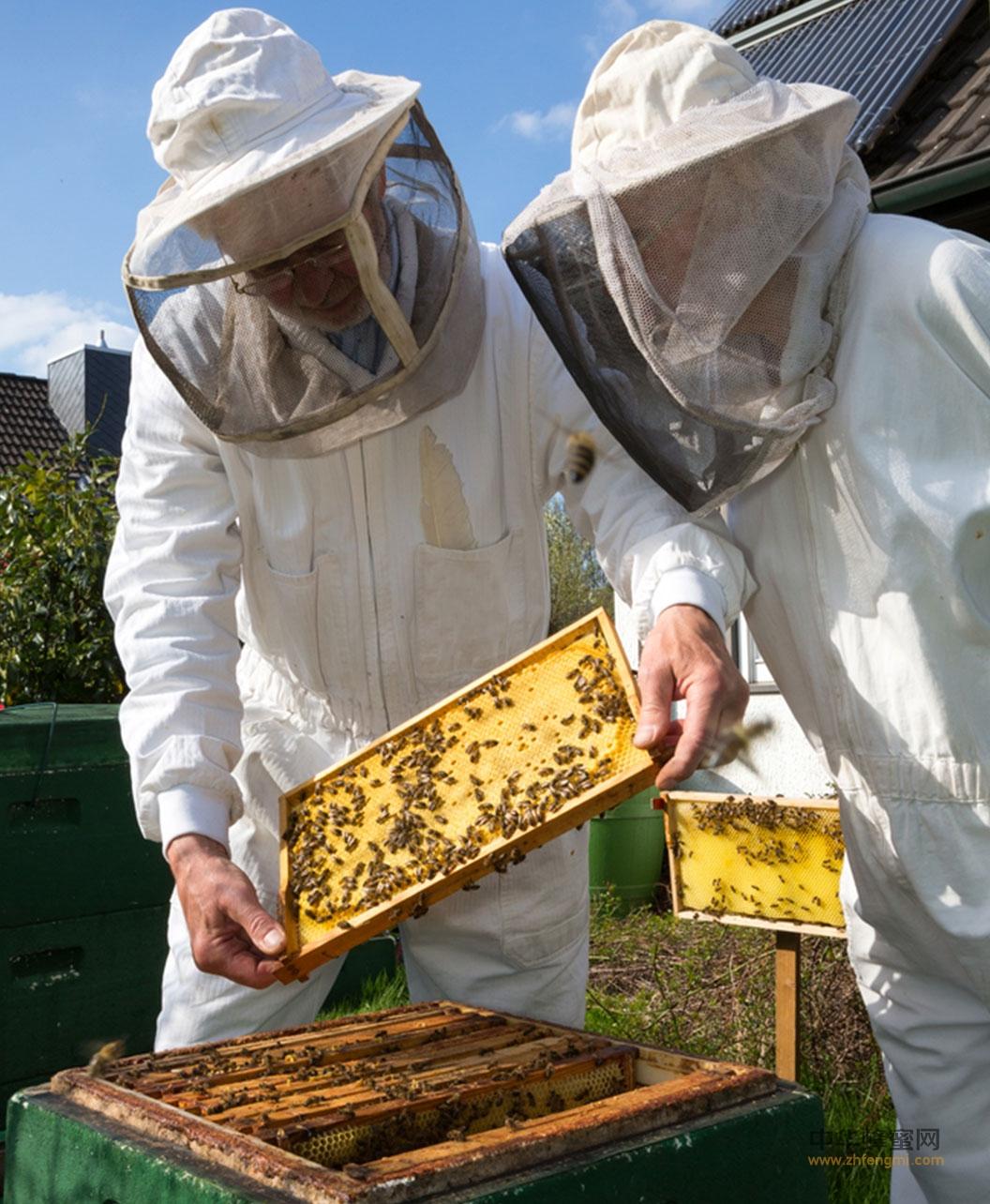 养蜂人 美国养蜂人 迈克·巴雷特 蜜蜂 蜂蜜