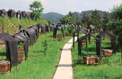 彭水县 重庆 中蜂 中华蜜蜂 中蜂产业 蜜源植物 蜂蜜 养蜂学会