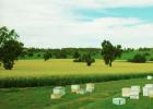 澧县 养蜂协会 蜜蜂养殖 养蜂产业 养蜂业 蜂蜜 养蜂户