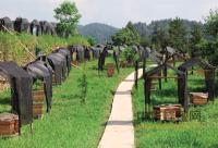2016中国中华蜜蜂产业发展大会22日在重庆彭水县召开