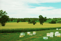 澧县养蜂协会
