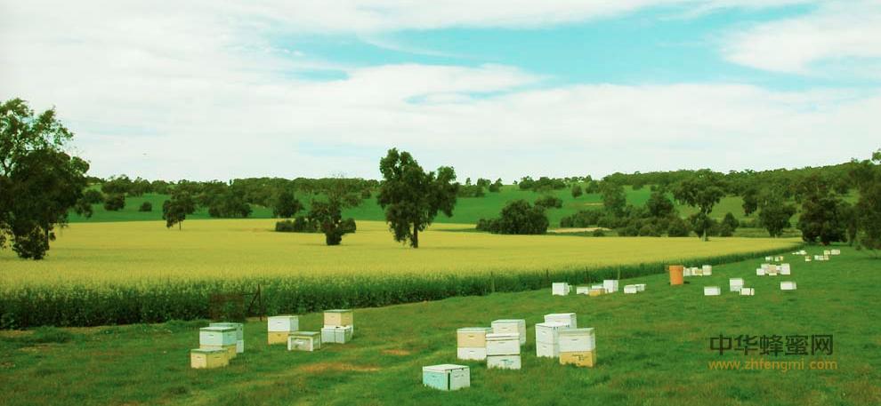 蜜蜂 养蜂人 蜂蜜