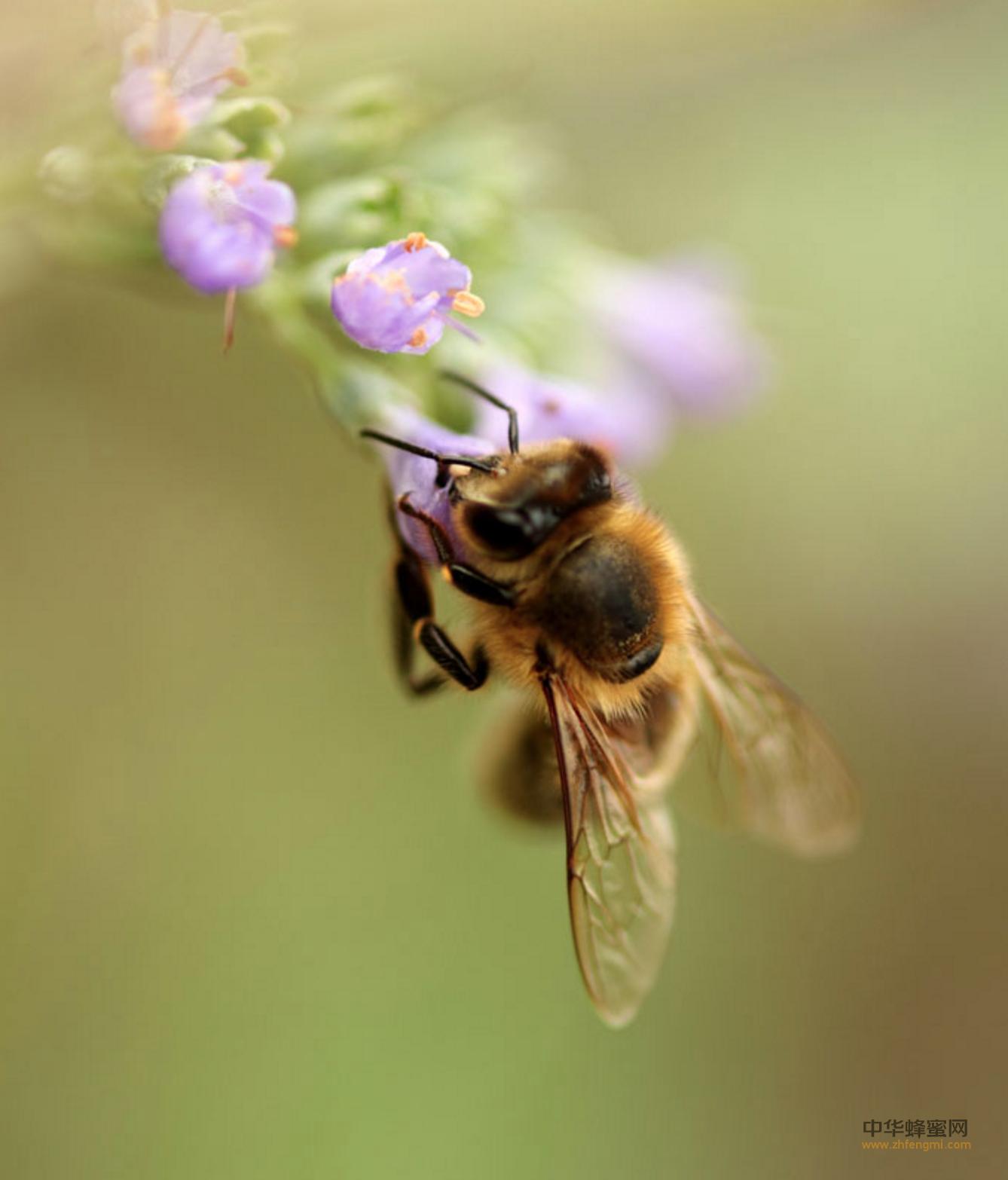 蜜蜂 蜂巢 蜜源地 蜂房