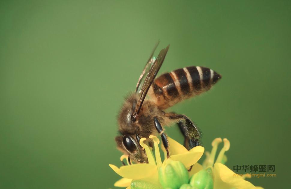 甘肃漳县 养蜂人 梁麦成 林泉村 中蜂养殖